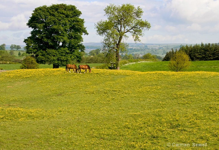 Horses and Buttercups - ID: 11999888 © Carmen B. Sewell