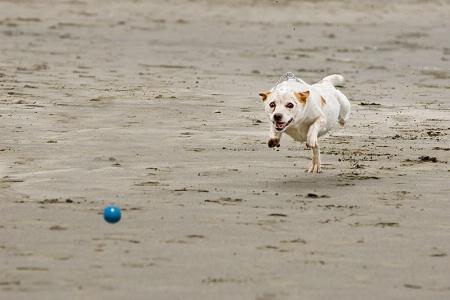 I Want My Ball