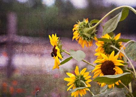garden buzz
