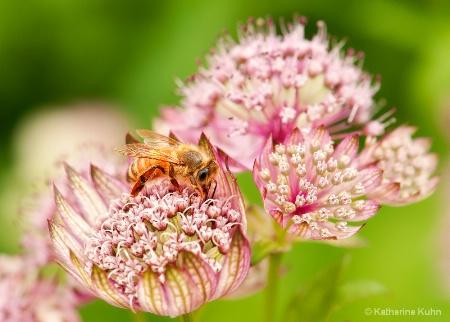 Pollen Gathering