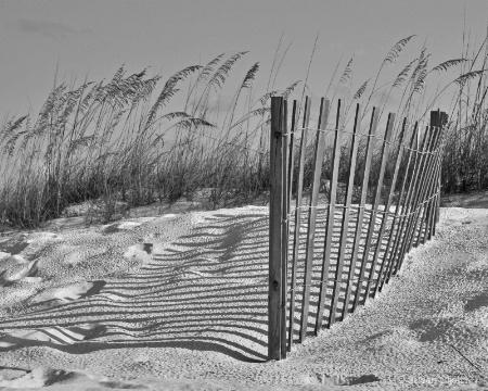 Dune Fence 7269B&W