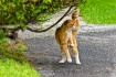 Breakdancing Cat
