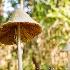 © Karol Grace PhotoID# 12028425: Mushroom