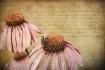 ~ Three cones ~