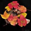 autumn's pall...