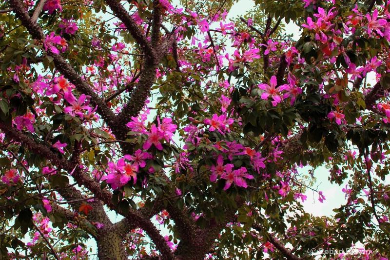 Blooming Trees Edited