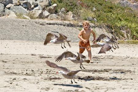 Fly...Fly...Fly Away