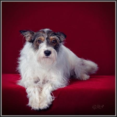 Sadie Portrait
