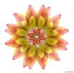 Lotus Bud Flip