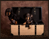 Doxies in a box