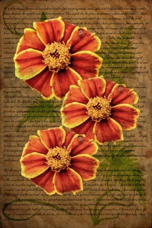 ~ Three Marigolds ~