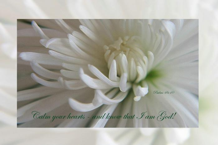Be Still and Know I am God! - S 027 - ID: 12120607 © Sheri Camarda