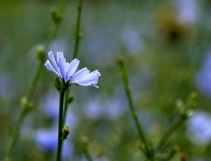 Simplicity - ID: 12126276 © Sharon L. Langfeldt