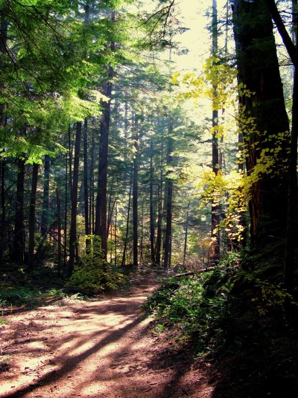 A Short Cut Through The Forest