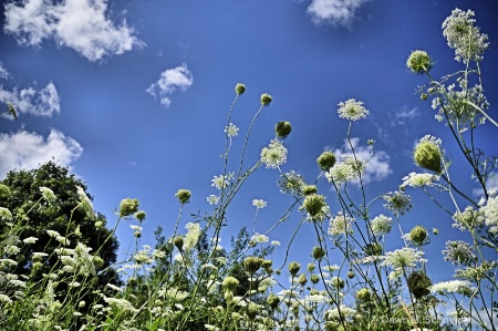 Under the Weeds