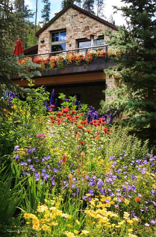 ~ Wild Flower Garden ~ - ID: 12142702 © Trudy L. Smuin