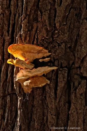 Tree Bark Fungi