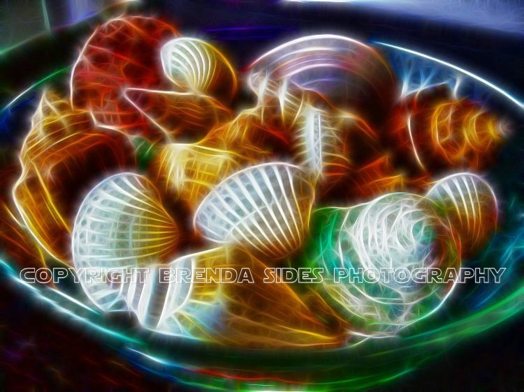 ~Bowl of Shells~