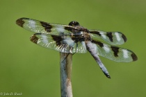 Dragonfly at Rest LR3 Enhanced-0418