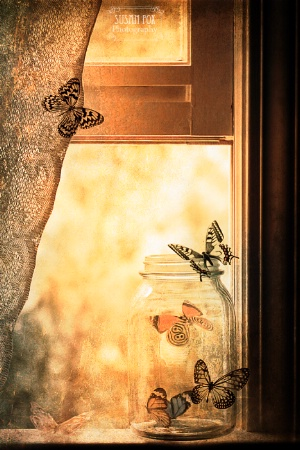Butterfly Jar