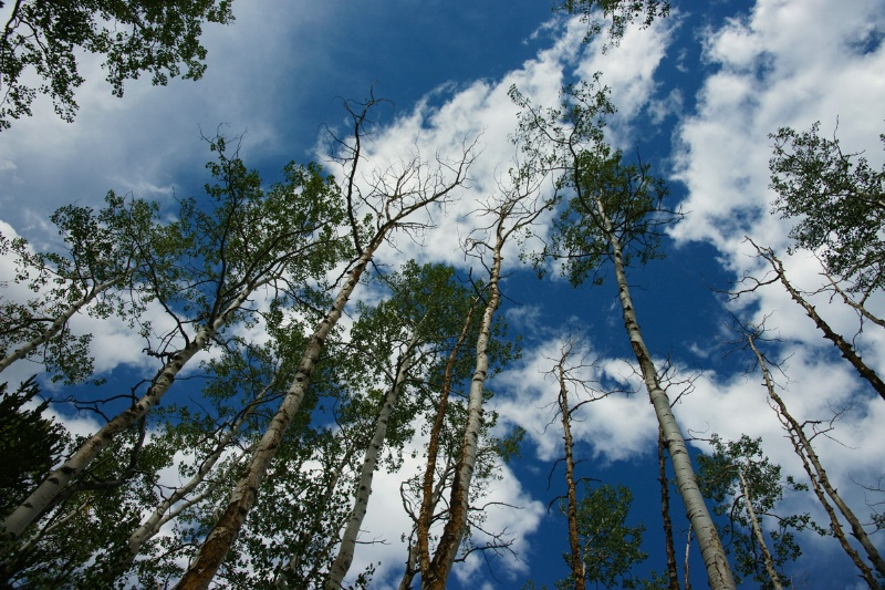 Reaching for the Colorado Blue Sky - ID: 12161745 © Sharon L. Langfeldt
