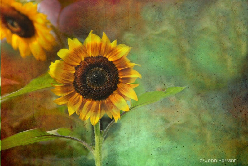 texturized sunflower edited-3