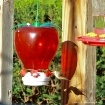 Hummingbird and i...