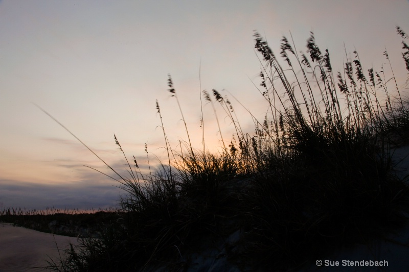 Sea Oats Bowing to the Setting Sun, Corolla, NC - ID: 12214936 © Sue P. Stendebach