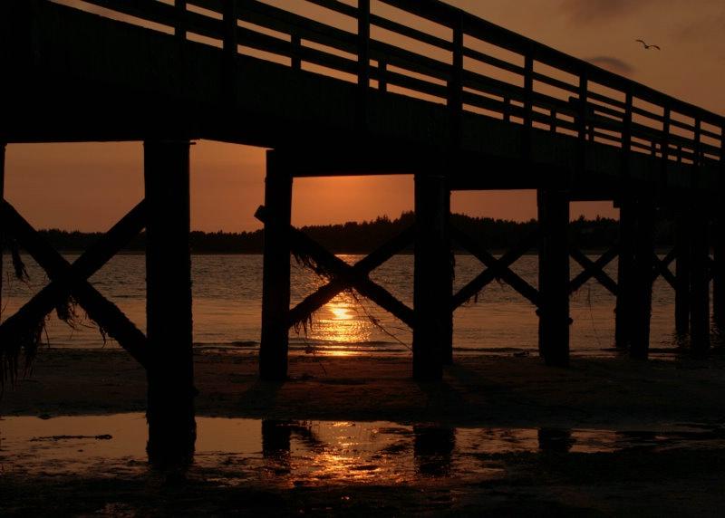 low tide under the pier - ID: 12224957 © cari martin