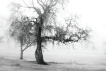 Rule of Thirds_Trees in Moning Fog