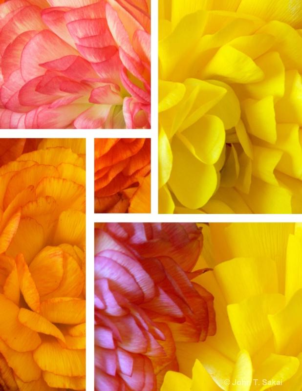 Flower Petals  - ID: 12239143 © John T. Sakai