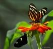 buterfly dance 1