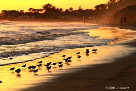 Sandpipers and Sundown