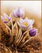 ~Burst of Spring~