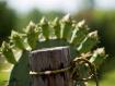 Cactus & Post
