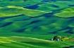 Emerald Hills of ...
