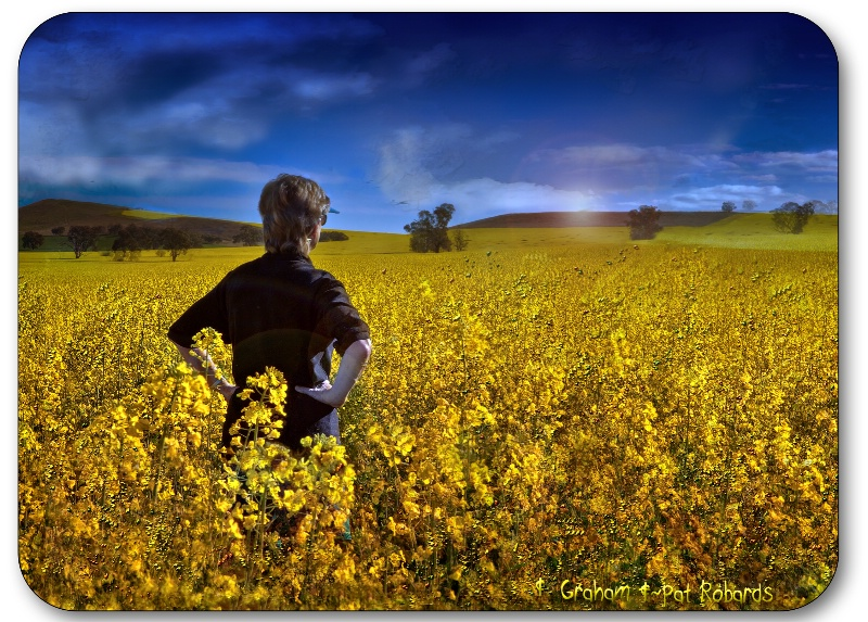I left my heart in the Yellow Fields
