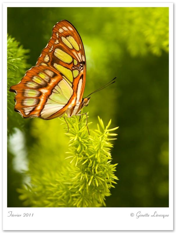 Papillons en liberte (Butterflys go Free)