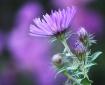 Purple Flower Clo...