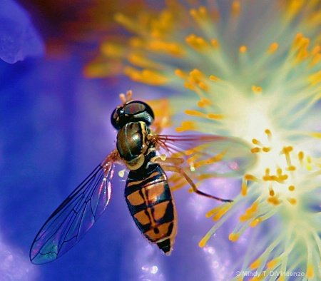Hover Fly Heaven