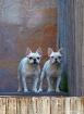 Portrait of two d...