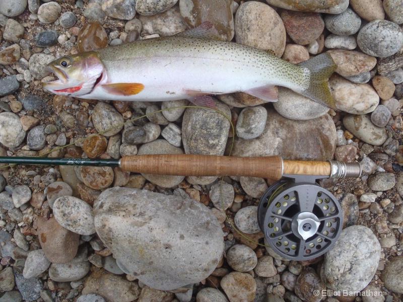 Cut-Bow Trout - ID: 12271795 © Elliot S. Barnathan