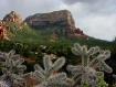 Cactus foreground