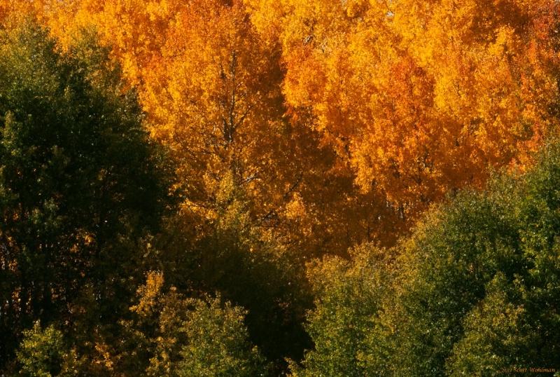 September Colors in Divide, CO