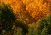 September Colors ...