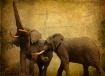 ~ Two Elephants ~