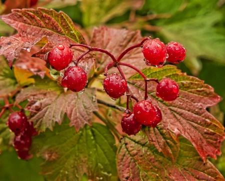 Fall Berry