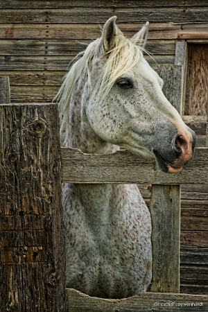 A Horse of  a  Different Colour