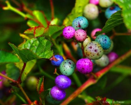 Berry Intersting