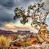 2Juniper in Moab - ID: 12301551 © Richard M. Waas